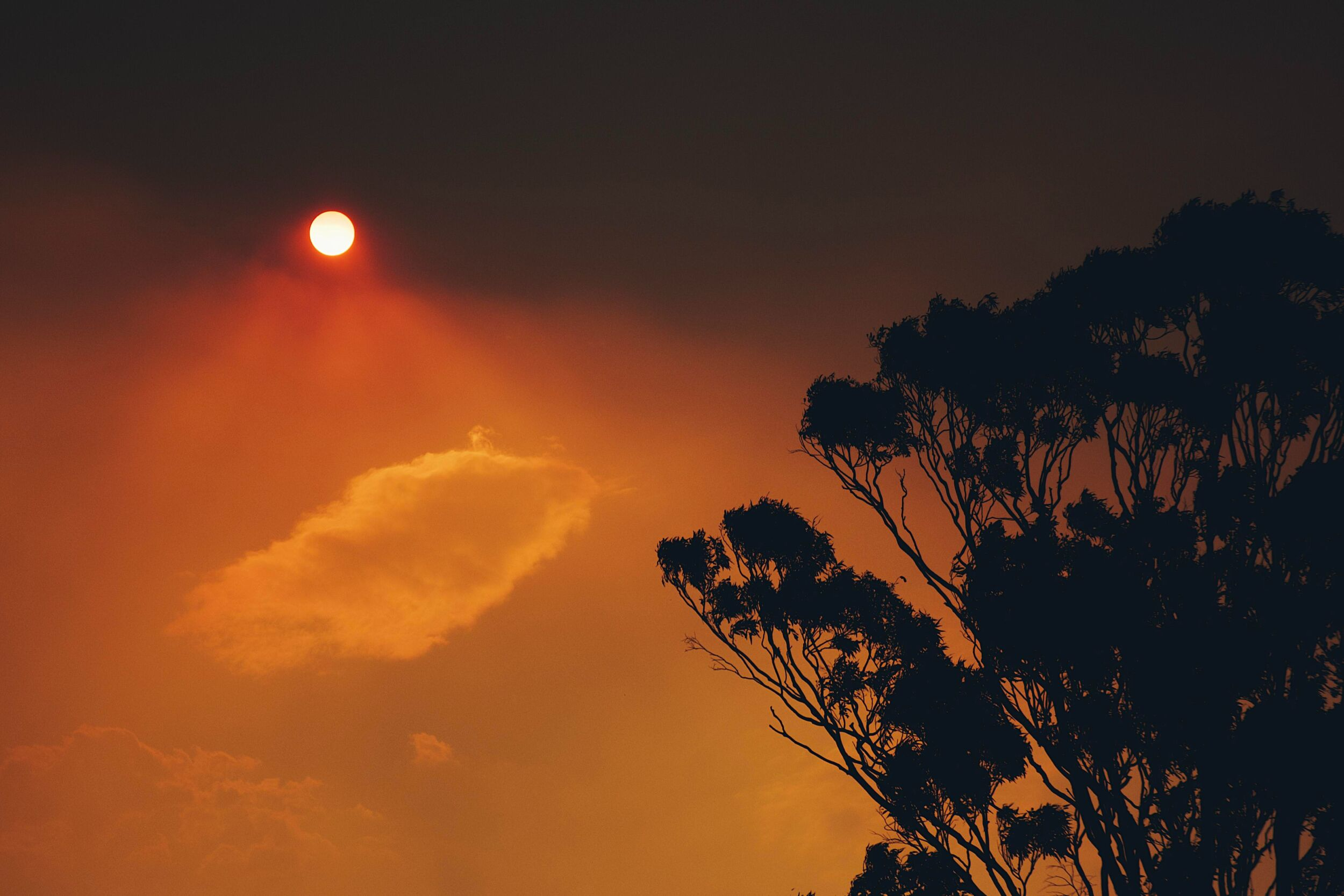 Orange sky and sun due to bushfire smoke, eucalyptus tree on the side of the frame
